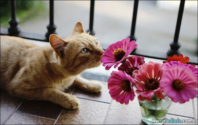 animais-que-gostam-de-flores-28