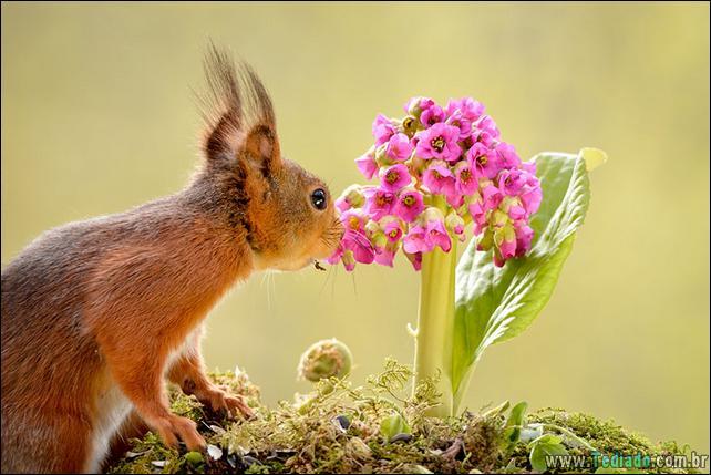 animais-que-gostam-de-flores-29