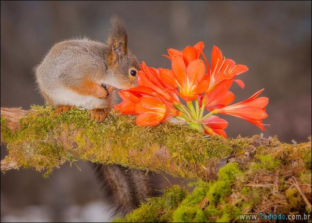 animais-que-gostam-de-flores-30