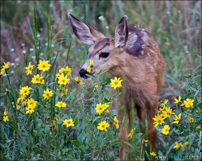 animais-que-gostam-de-flores-32
