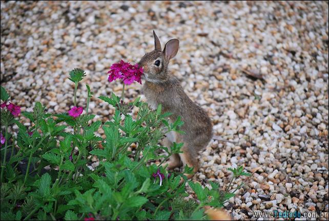 animais-que-gostam-de-flores-34