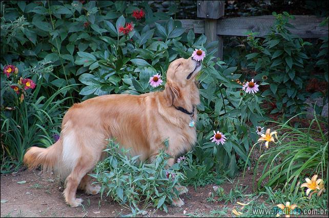 animais-que-gostam-de-flores-36