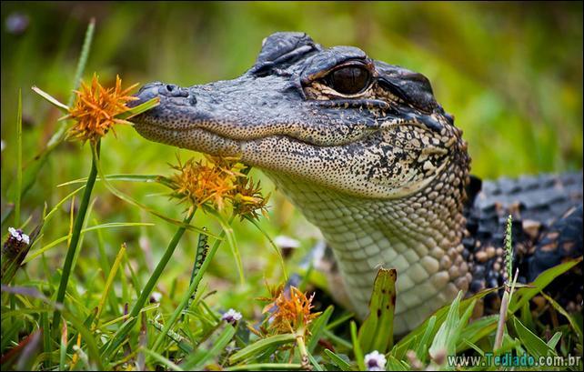 animais-que-gostam-de-flores-37