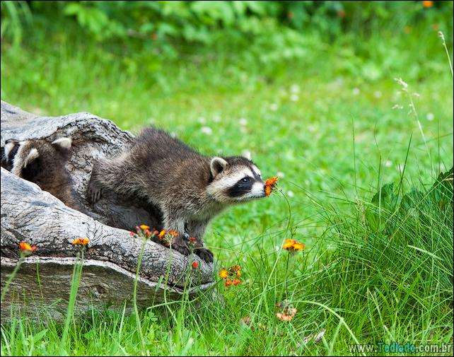 animais-que-gostam-de-flores-38