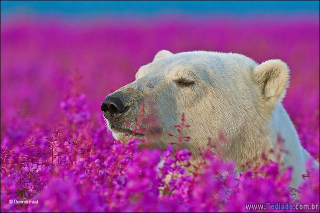 animais-que-gostam-de-flores-39