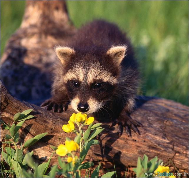 animais-que-gostam-de-flores-40