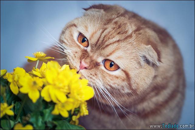 animais-que-gostam-de-flores-41
