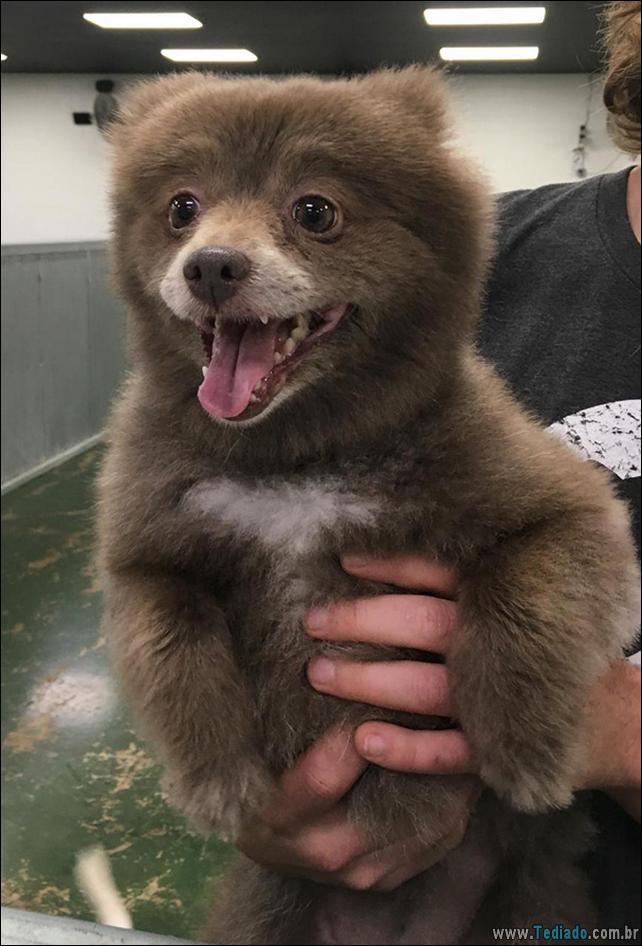 cachorros-que-se-parecem-com-ursos-02