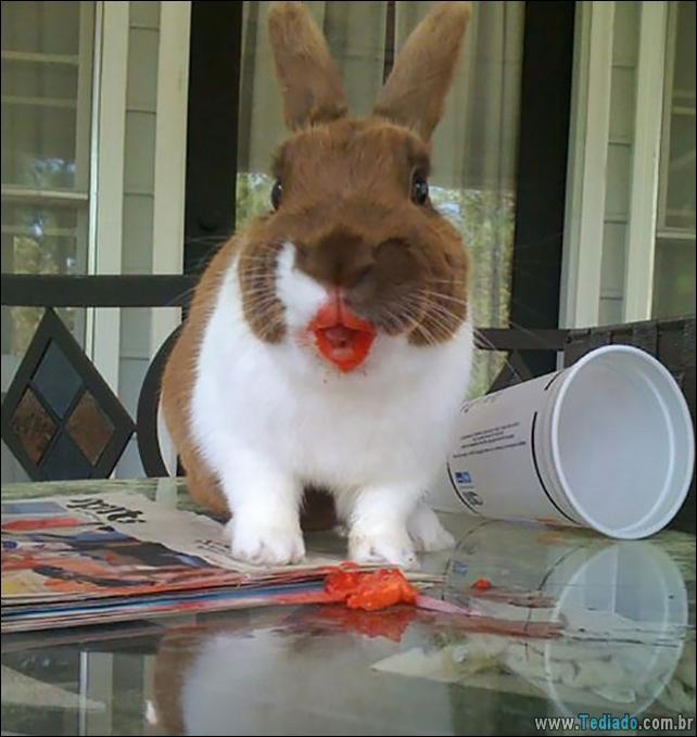 fotos-animais-comendo-voce-feliz-03