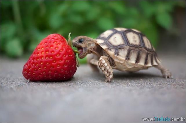 fotos-animais-comendo-voce-feliz-04