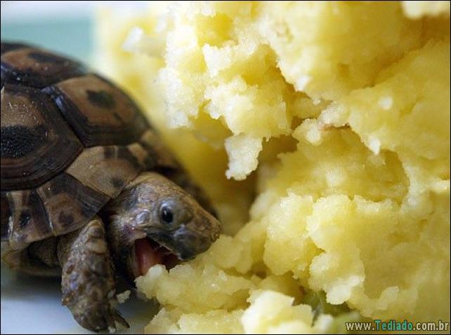 fotos-animais-comendo-voce-feliz-08