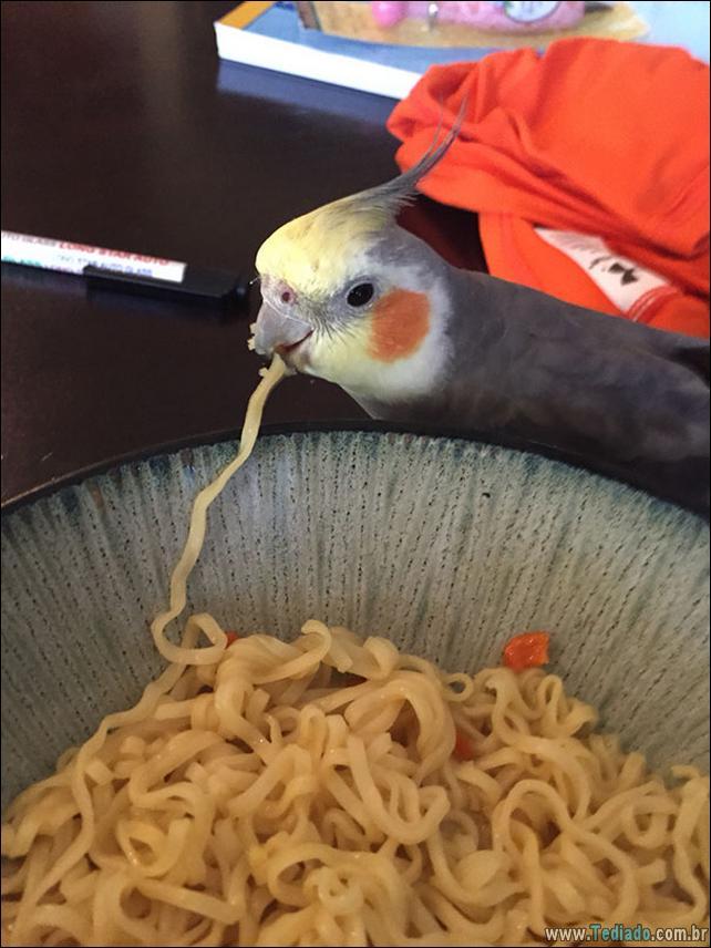 fotos-animais-comendo-voce-feliz-12