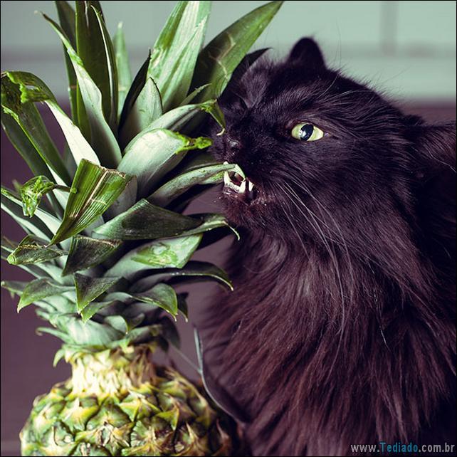 fotos-animais-comendo-voce-feliz-14