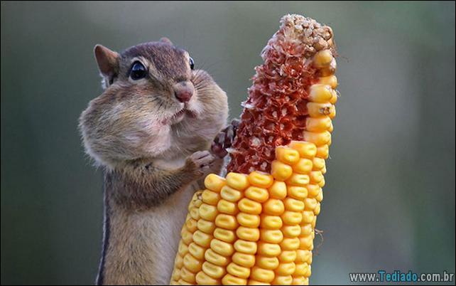 fotos-animais-comendo-voce-feliz-15