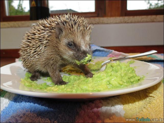 fotos-animais-comendo-voce-feliz-16