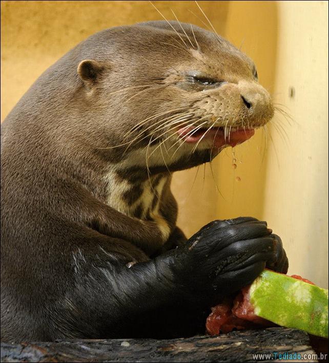 fotos-animais-comendo-voce-feliz-17