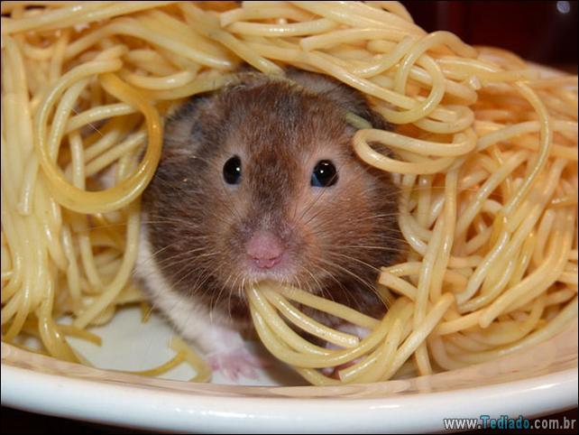 fotos-animais-comendo-voce-feliz-20