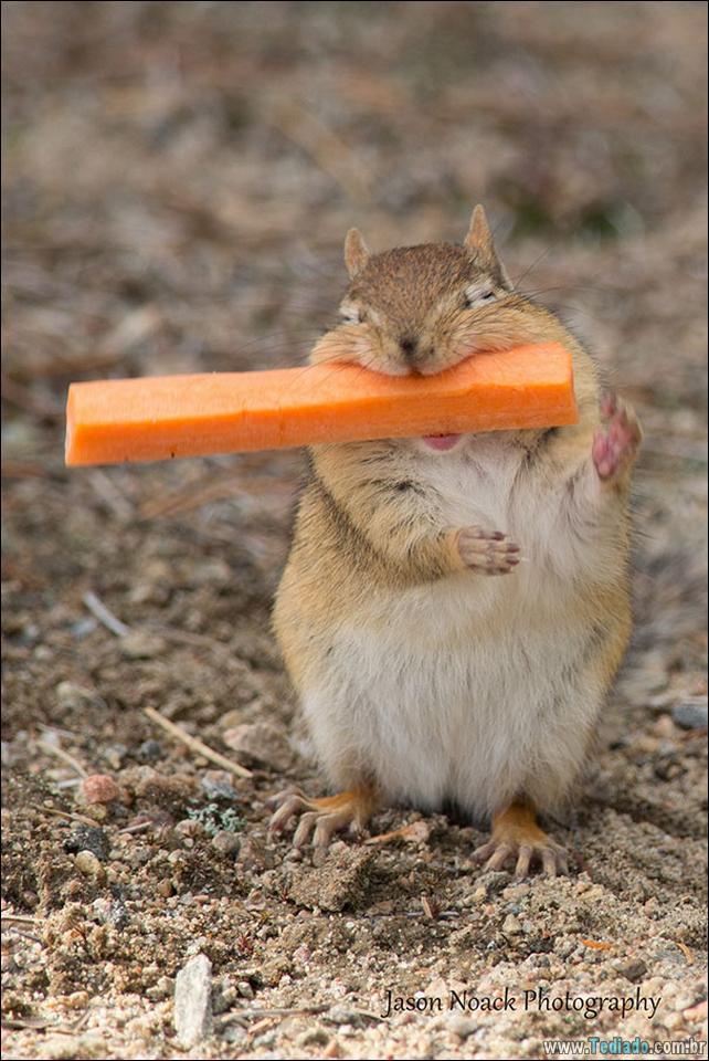 fotos-animais-comendo-voce-feliz-22
