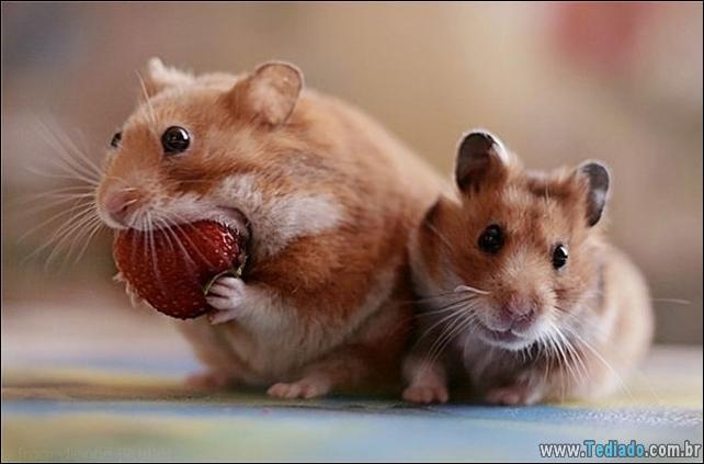 fotos-animais-comendo-voce-feliz-23