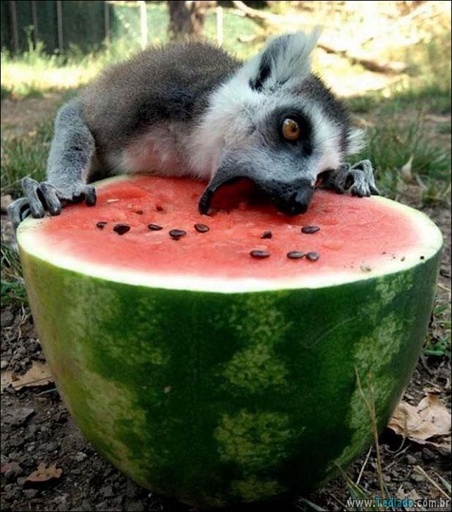 fotos-animais-comendo-voce-feliz-24