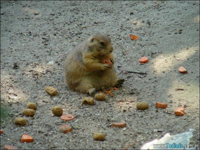 fotos-animais-comendo-voce-feliz-27