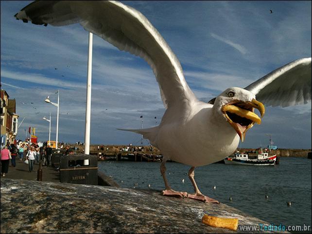 fotos-animais-comendo-voce-feliz-28
