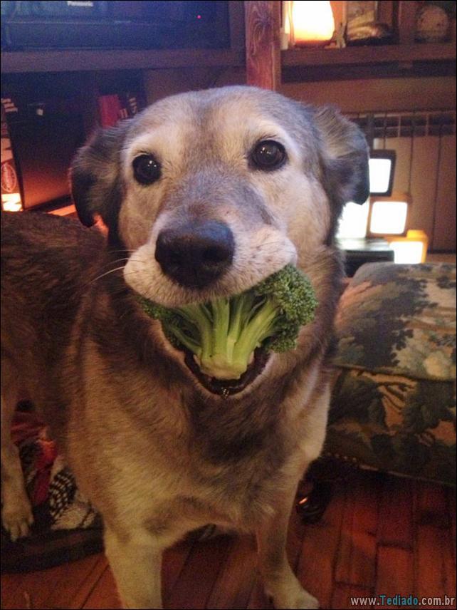 fotos-animais-comendo-voce-feliz-29