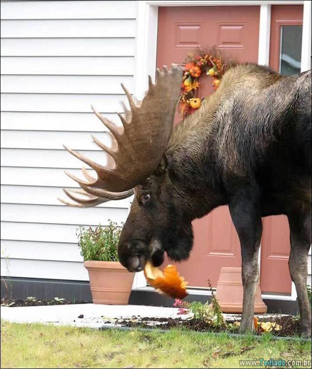 fotos-animais-comendo-voce-feliz-30