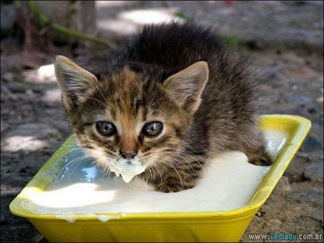 fotos-animais-comendo-voce-feliz-31