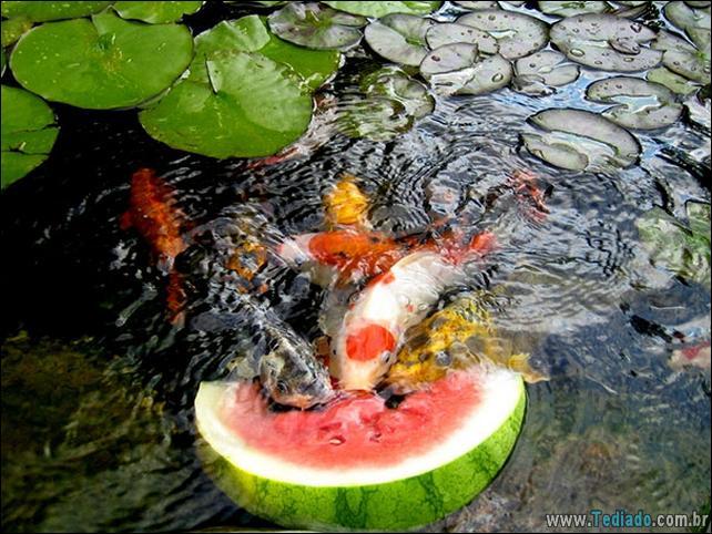 fotos-animais-comendo-voce-feliz-34