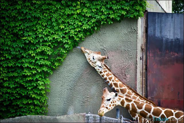 fotos-animais-comendo-voce-feliz-36