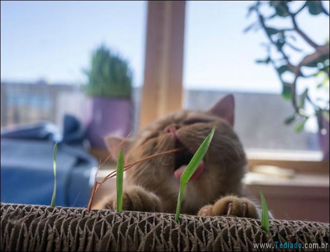 fotos-animais-comendo-voce-feliz-40