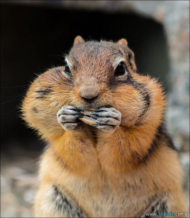 fotos-animais-comendo-voce-feliz-42