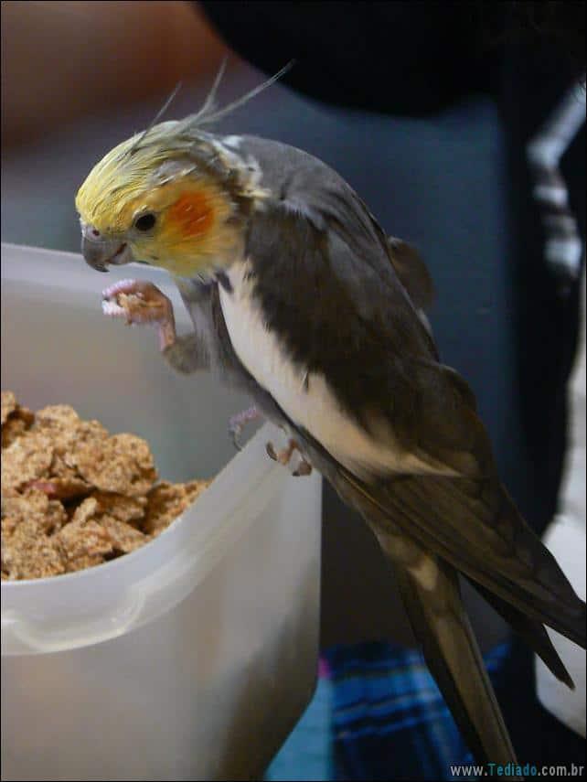 fotos-animais-comendo-voce-feliz-43