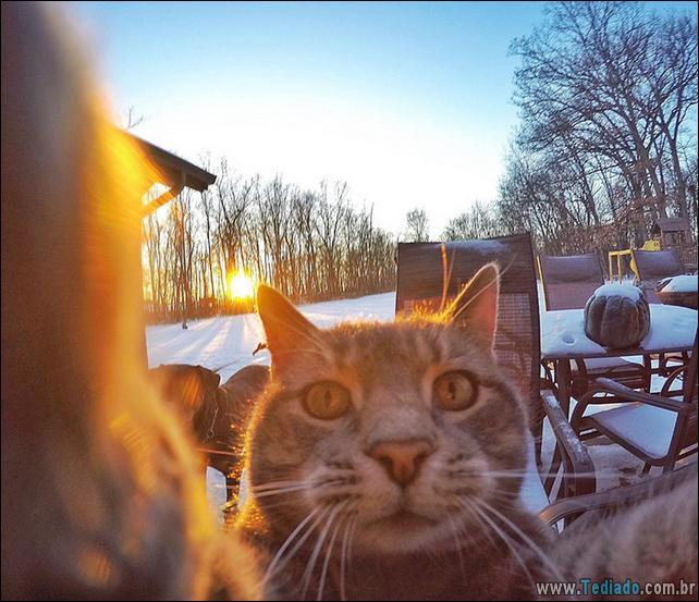 gato-que-adorar-tirar-selfie-01