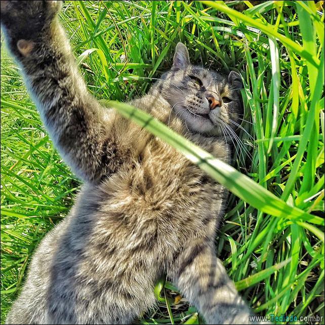 gato-que-adorar-tirar-selfie-02