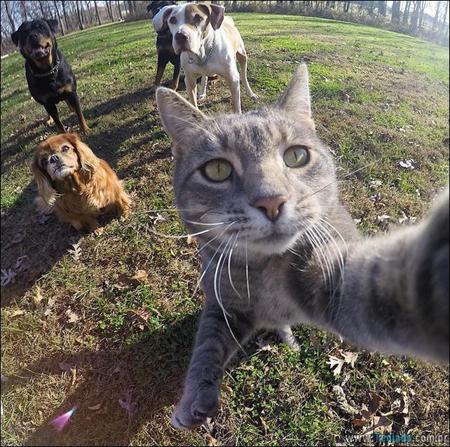 gato-que-adorar-tirar-selfie-03