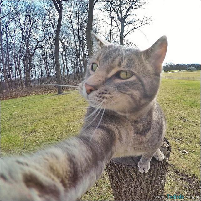 gato-que-adorar-tirar-selfie-04