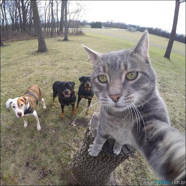gato-que-adorar-tirar-selfie-05