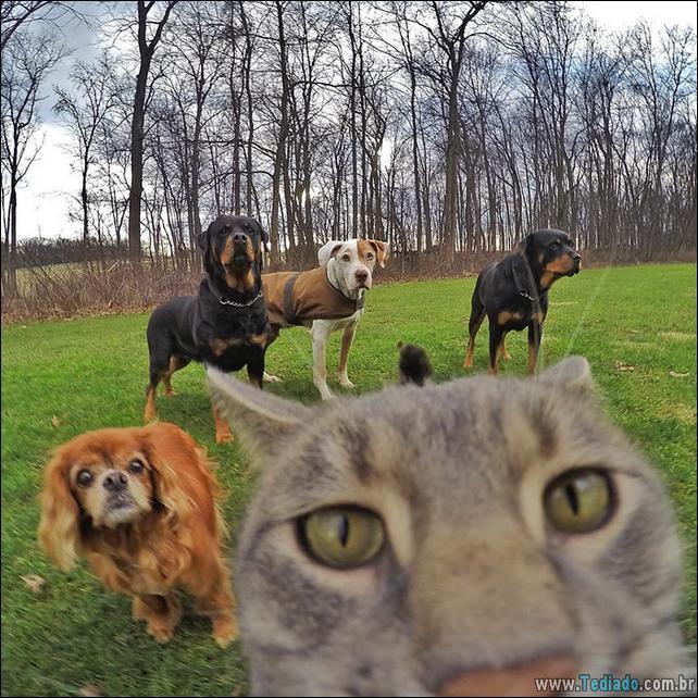 gato-que-adorar-tirar-selfie-06