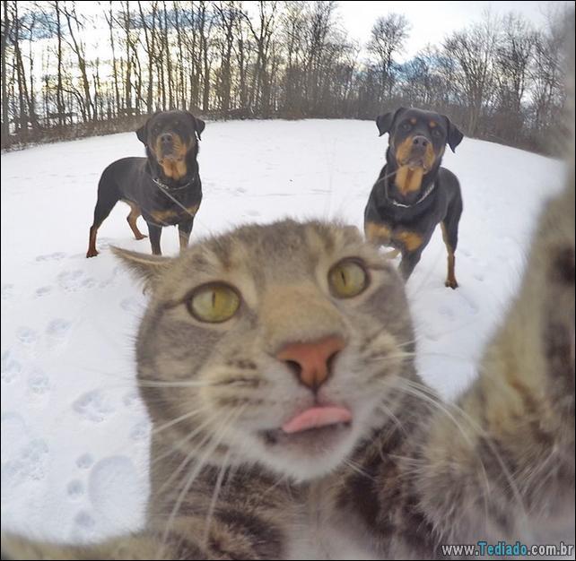 gato-que-adorar-tirar-selfie-07