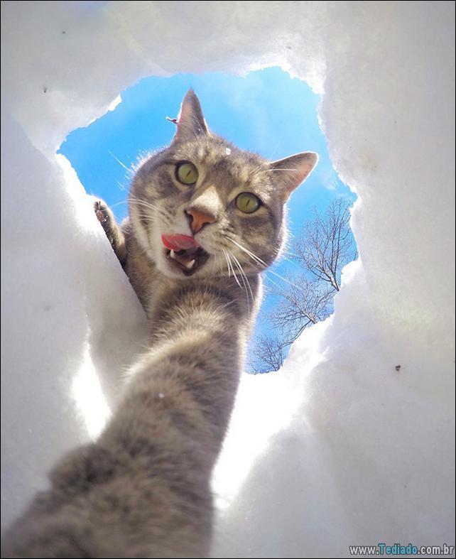 gato-que-adorar-tirar-selfie-08
