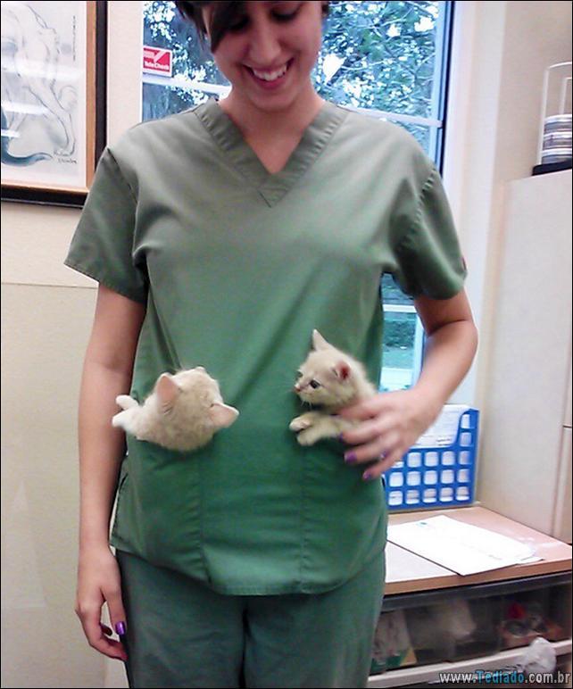 hospital-de-animais-05