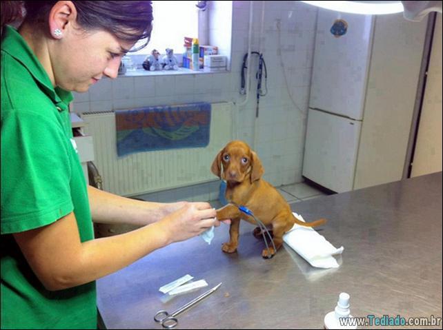 hospital-de-animais-20