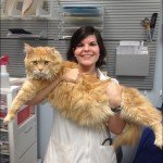 28 Benefícios de trabalhar em um hospital de animais