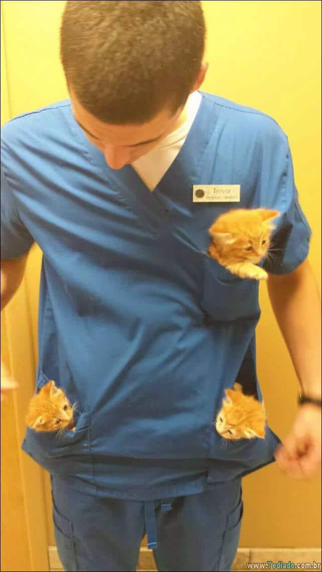 hospital-de-animais-28