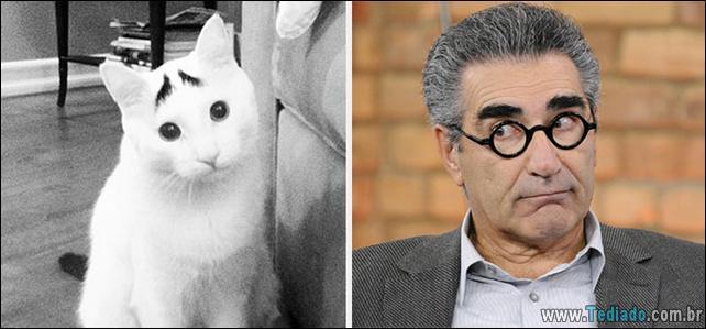 animais-que-e-semelhantes-com-celebridades-11
