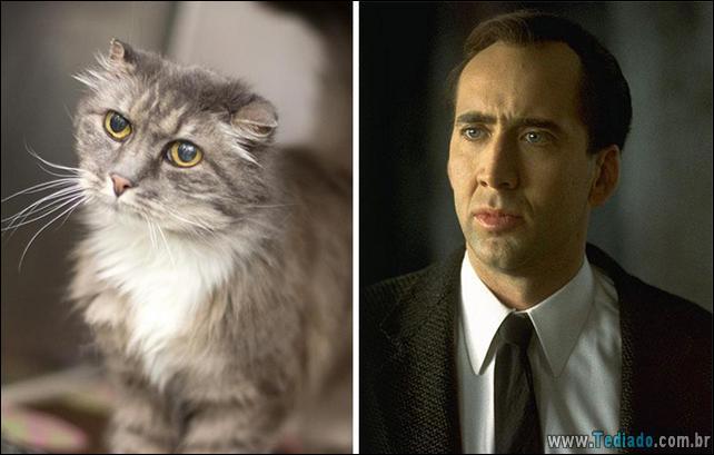 animais-que-e-semelhantes-com-celebridades-13