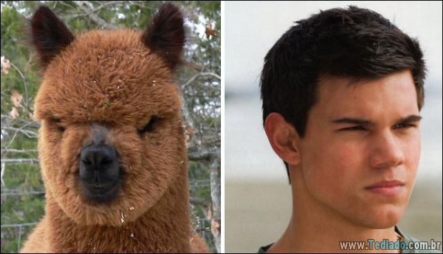 animais-que-e-semelhantes-com-celebridades-14