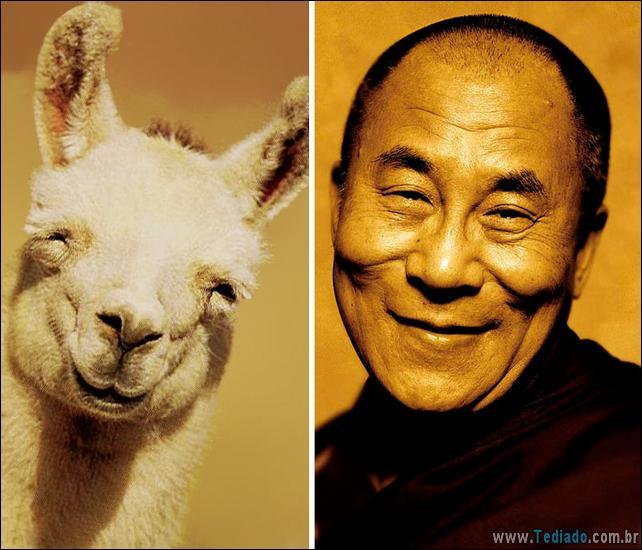 animais-que-e-semelhantes-com-celebridades-20